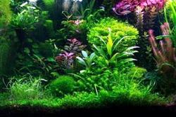 Eksotisme Taman Air
