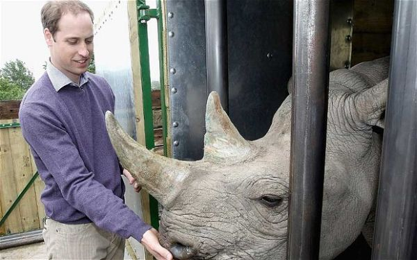 Pangeran William Konservasi Harimau Afrika
