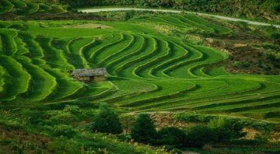 \Ladang Ganja di Aceh Dialih Fungsi ke Nilam & Sayuran\