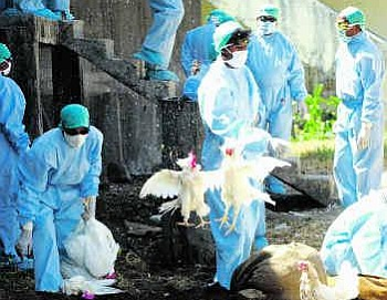 Korban Flu Burung Bertambah, China Hentikan Penjualan Unggas