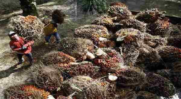 \BUMN Ditawarkan Investasi Kelapa Sawit di Filipina\