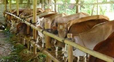 \Kebutuhan Sapi Kurban di Jawa Barat Diprediksi Aman\