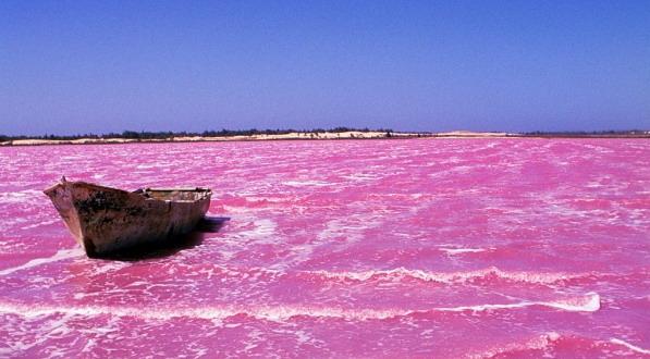 Keajaiban Alam Serba-Pink