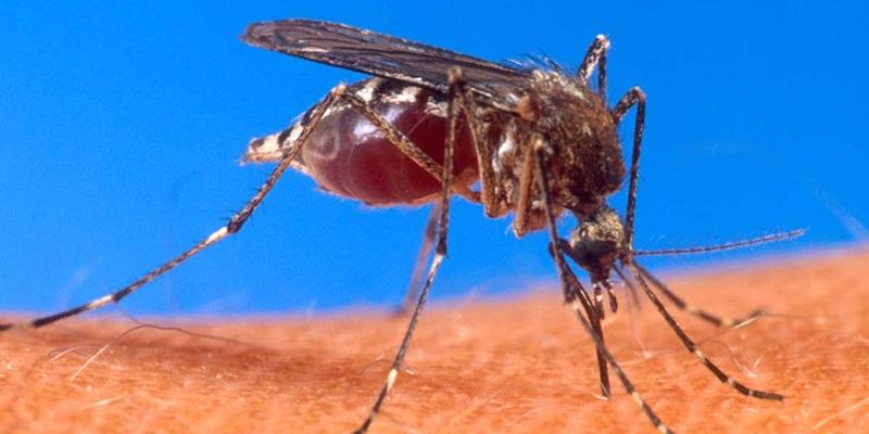 Tips Menggunakan Losion Antinyamuk