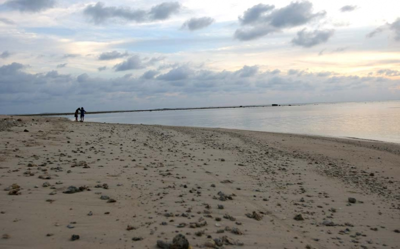 Rumput Laut Indonesia Tak Laku di Negeri Sendiri