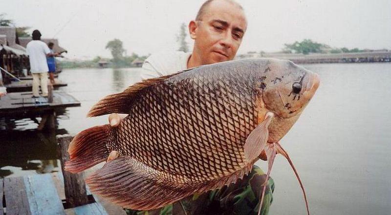 Ikan yang Bau Tanah, Hilangkan dengan Garam