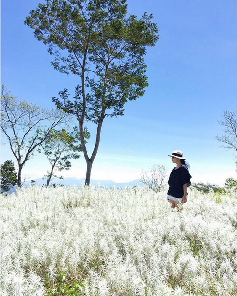 FOTO: Melihat Bunga Keabadian di Pulau Dewata
