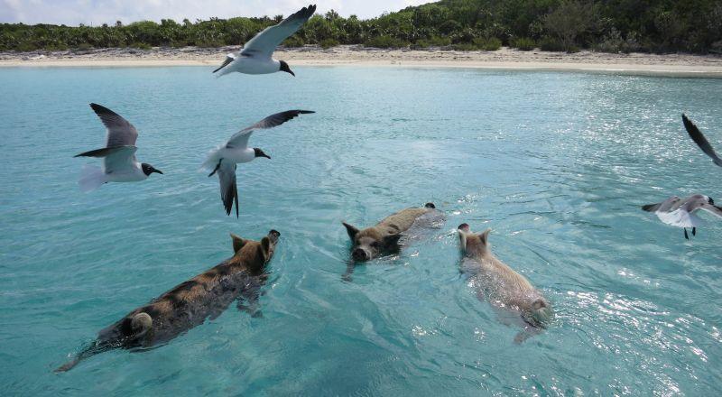 Enam Pulau Terbaik Berenang dengan Binatang