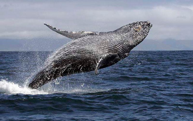 Ingin Berenang dengan Binatang, ke Pulau Ini Saja!