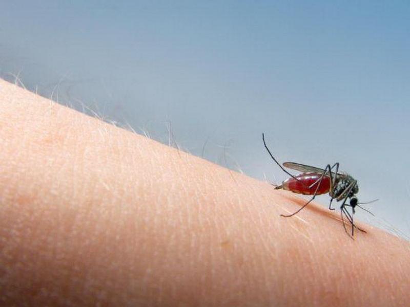 TOP HEALTH: Awas, Gigitan Nyamuk Akibatkan 3 Penyakit Ini