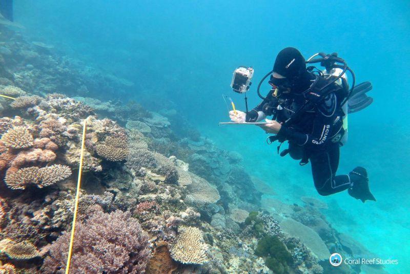 Terumbu Karang di Australia Terancam Punah