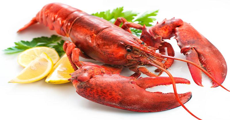 Demi Selamatkan Lobster Berusia 100 Tahun, Wanita Ini Rogoh Kocek Jutaan Rupiah