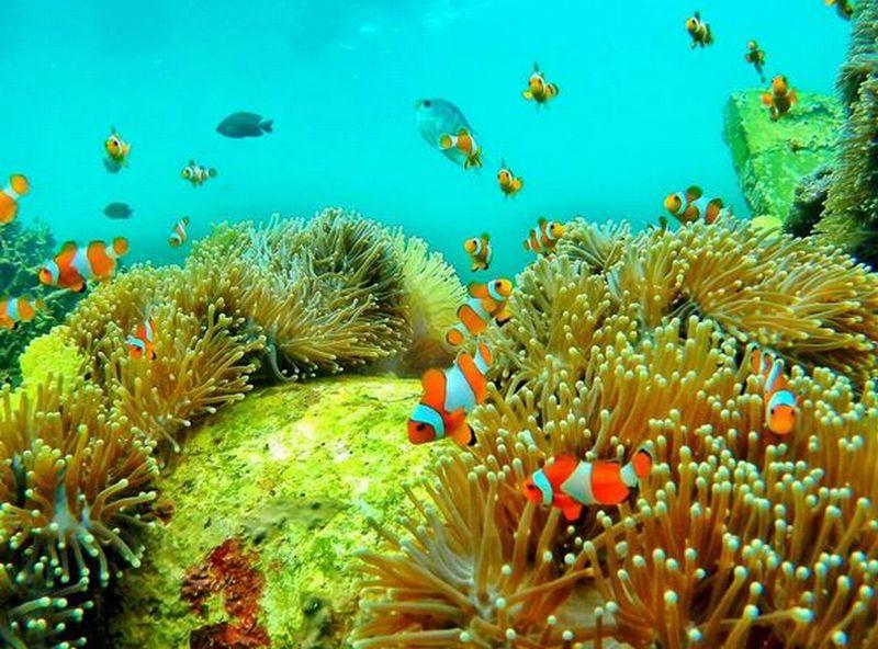 Yuk, Melaut di Pulau Pahawang dan Teluk Kiluan Lampung