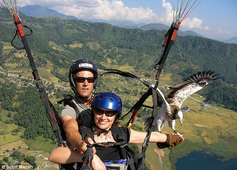 Sensasi Paragliding Sambil Beri Makan Burung Pemangsa