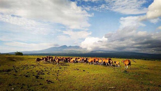 Doro Ncanga di Sumbawa Hadirkan Pertualangan bak Afrika