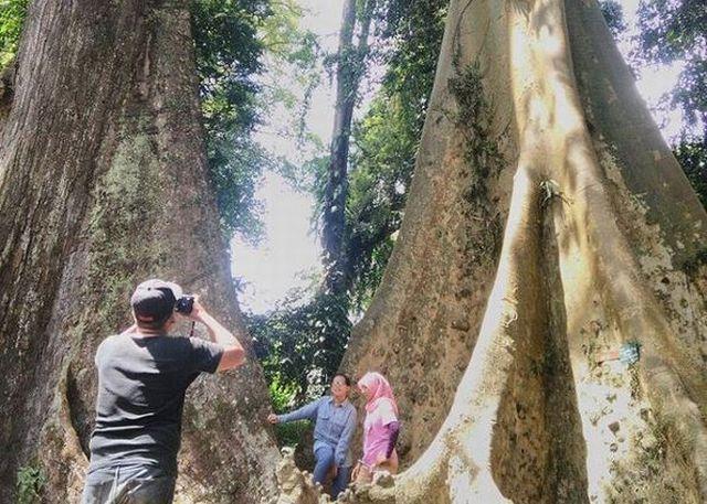 VALENTINE 2017: Lokasi Pohon Jodoh yang Dipercaya Bikin Hubungan Langgeng