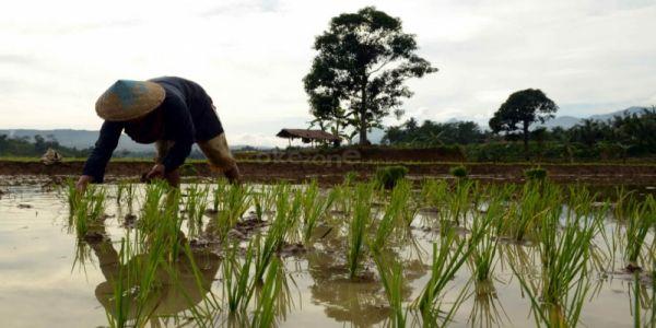 \Anggaran Dana Desa 2017 Difokuskan Bangun Pertanian\