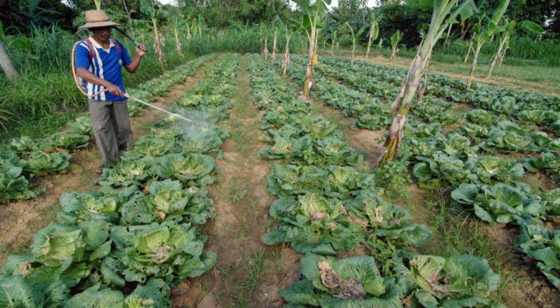 \Duh, Asuransi Pertanian Kurang Diminati Padahal Bikin Untung\