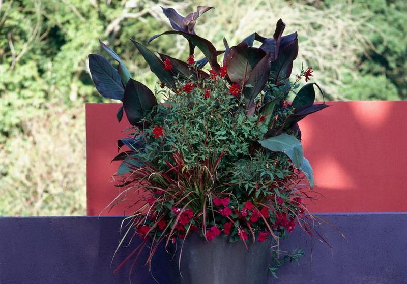 Ingin Menanam Bunga tapi Lahan Sempit, Bikin Container Garden Saja!