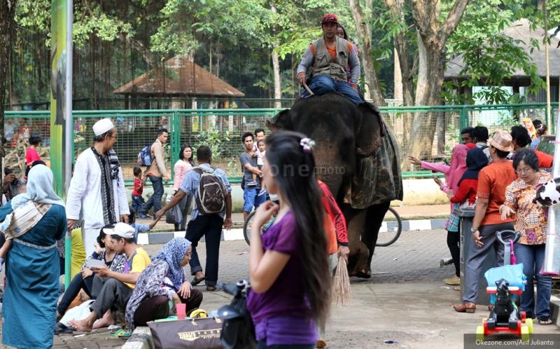 Kebun Binatang Ragunan Tempat Rekreasi Favorit Keluarga Usai Nyoblos
