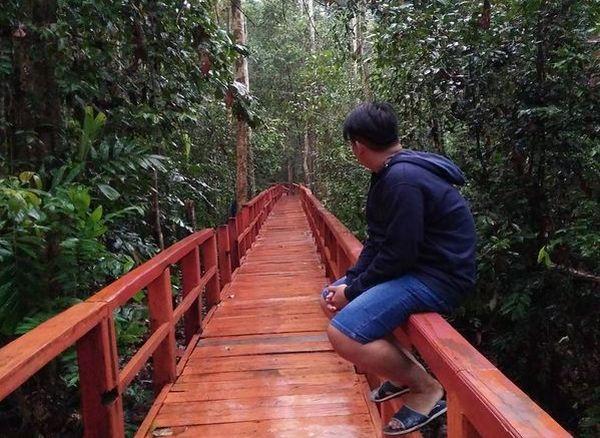 Hutan Pelawan Hadirkan Sejuta Manfaat Kehidupan di Pulau Bangka
