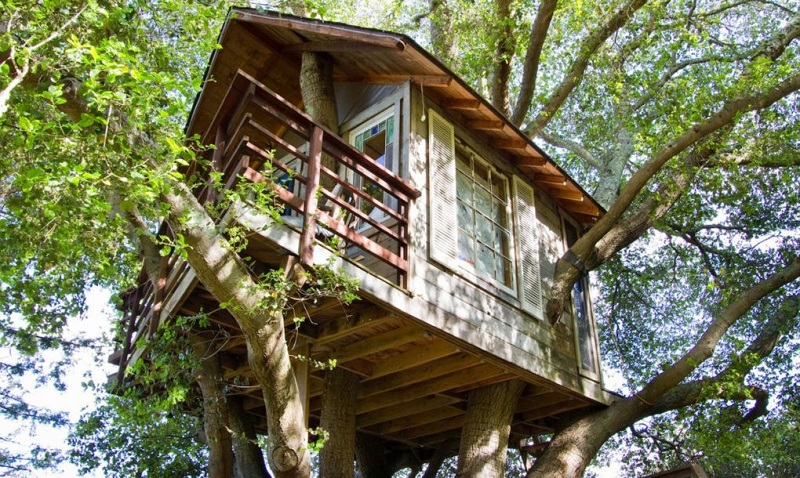 \Sewa Rumah Pohon Berusia 150 Tahun Ini Dipatok Rp3,6 Juta/Malam\