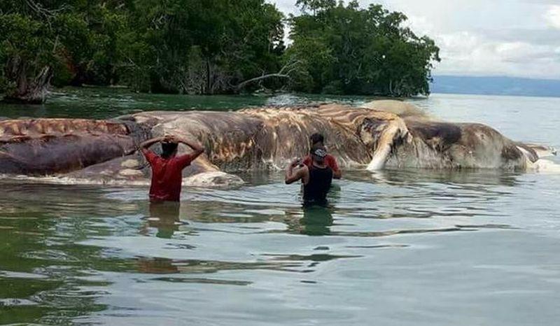 Hiii,,,Ada Monster Laut Aneh Ditemukan di Pulau Seram