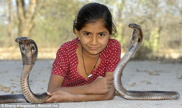 Kenali Suku Vadi, Pawang Ular Kobra di India