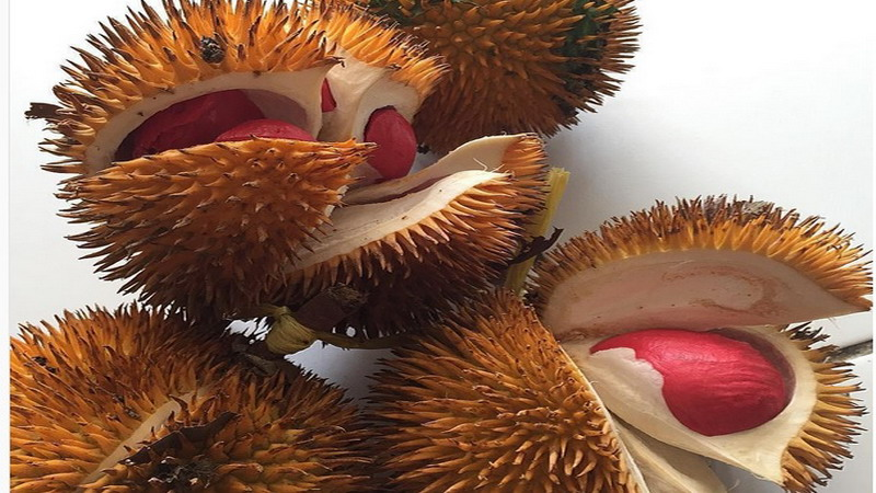 Liburan ke Banyuwangi? Jangan Lupa Cicipi Durian Merah nan Unik Ini