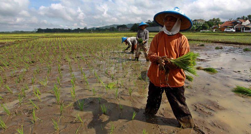 \Penting, Sektor Pertanian Perlu Dukungan Startup\