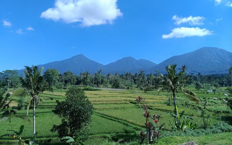 Menikmati Suasana Alam Penuh Ketenangan di Jatiluwih Bali