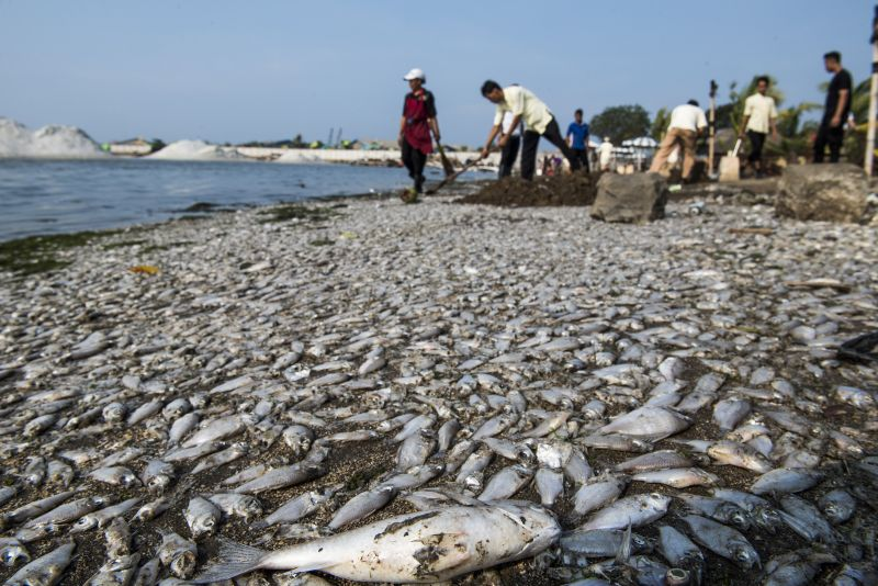 \Illegal Fishing Serang 2 Wilayah Pengelolaan Perikanan Indonesia   \