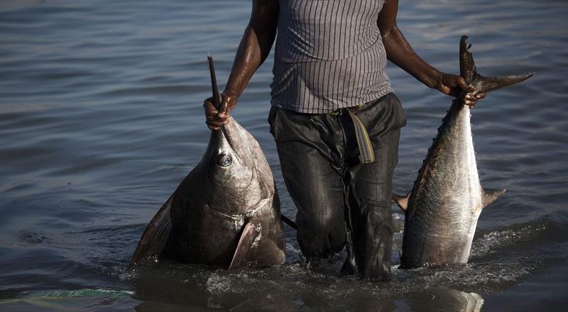 \Masa Transisi, Hasil Tangkapan Ikan Turun\