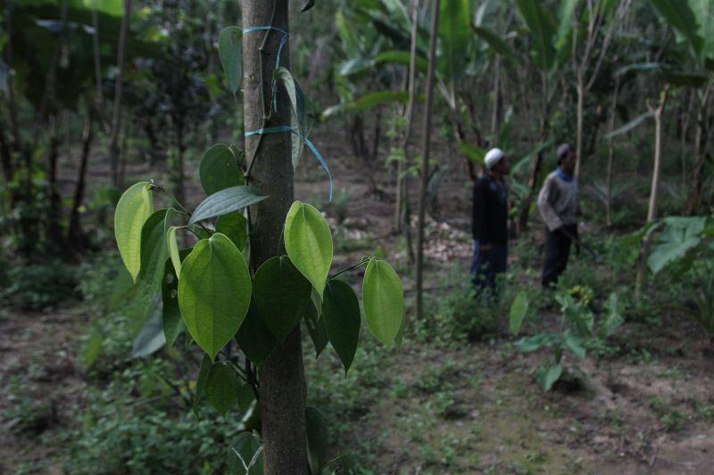 \  Ada Relaksasi Aturan, Nasib Pekerja Sektor Kehutanan Riau Tetap Terancam\