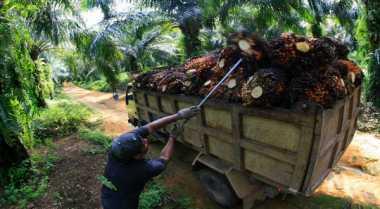 Carrefour dukung petani plasma Cargill