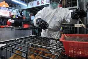 H5N1 mewabah, China musnahkan 150 ribu unggas