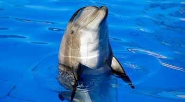 Petugas Selamatkan Lima Perenang dari Lumba-Lumba