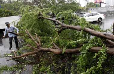 Tertimpa Pohon, Pemilik Mobil Minta Ganti Rugi Pemkot Bandung