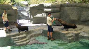 Medan Zoo Punya Taman Bermain