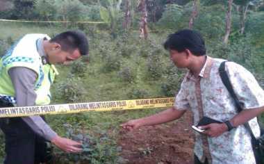 Ladang Katinon Kembali Ditemukan di Vila Puncak