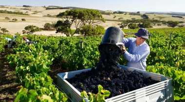 Jalan-Jalan ke Kebun & Kilang Anggur di Australia