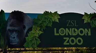 Kebun Binatang London Bisa Menginap