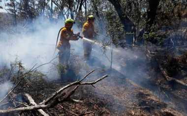 Polda Riau Tetapkan 24 Tersangka Pembakar Hutan