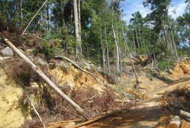 Pembabatan Hutan di Anambas Bisa Jadi Bom Waktu