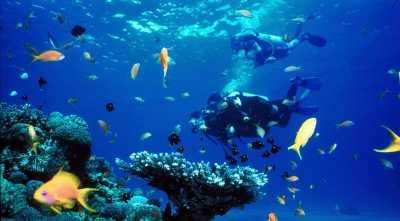 Kekecewaan Enno Lerian Diving di Sibolga