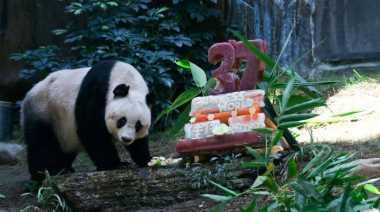Panda Tertua Ada di Hong Kong