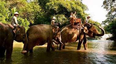 Gajah Bawa Kabur Turis Tiongkok