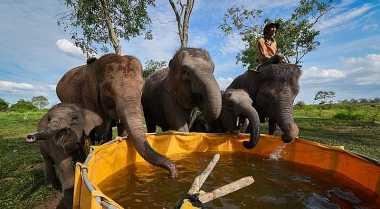 Gajah di Thailand Terlalu Dieksploitasi