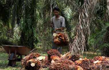Buruh Sawit di Bengkulu Mogok Kerja