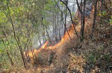 Seminggu Lebih Kebakaran Hutan Gunung Lawu Belum Padam